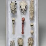 News – NECA Predator Trophy Skull Pack Now on Amazon!